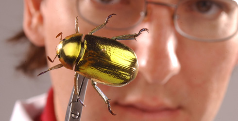 Max Barclay with gold chafer beetle