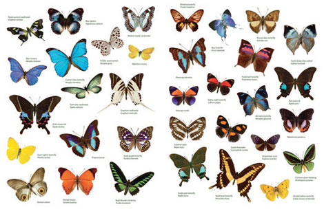 Pages from Butterfly Jungle Sticker Book