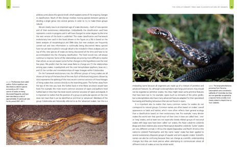 Snakes 2012 revised edition book pages