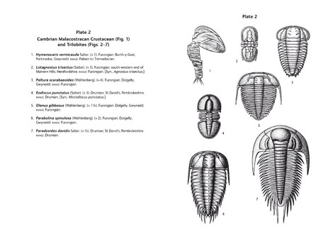 Pages from British Palaeozoic Fossils