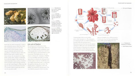Pages from Seaweeds