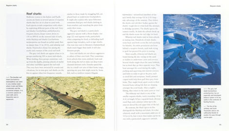 Pages from Sharks