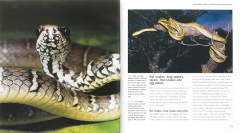 Pages from Snakes