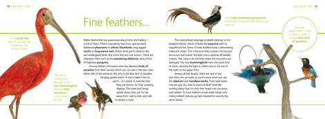 Pages from the Natural History Museum at Tring Visitor Guide