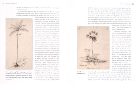 Pages from Footsteps in the Forest