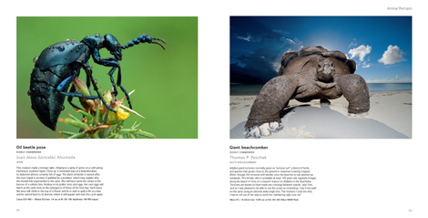 Pages from Wildlife Photographer of the Year Portfolio 20