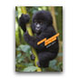 Wildlife Photographer of the Year Pocket Diary 2011 cover