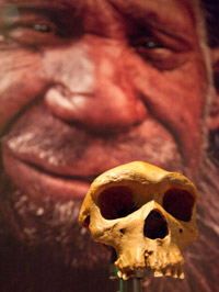 Early human skull from the Extinction exhibition