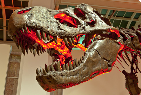 The enormous T.rex cast from T.rex: The Killer Question exhibition