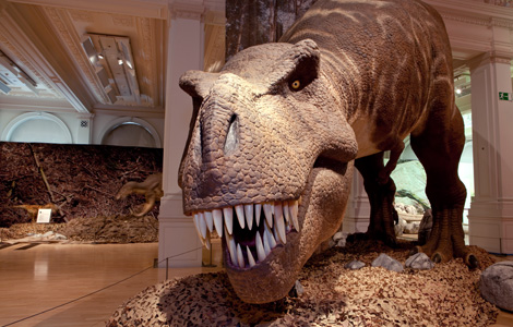 The impressive, full-size T.rex model
