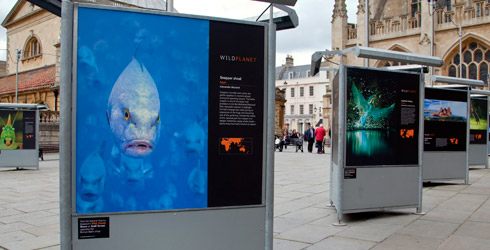 Striking Wild Planet image panels outside Bath Abbey