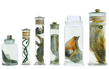 Specimen jars from the Museum collections