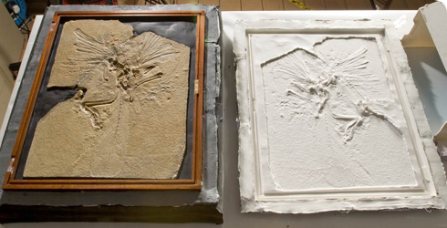 The Museum's Archaeopteryx specimen and a mould