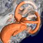 A barn owl's skull with the bony inner ear highlighted.