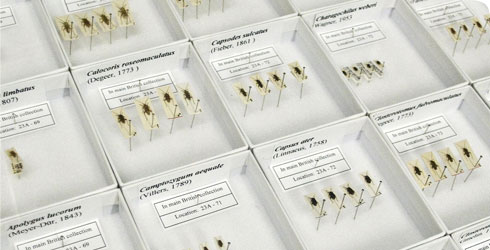 Hemiptera collection