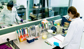 Working in the Molecular laboratories
