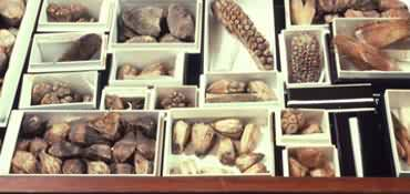 Drawer of seed specimens