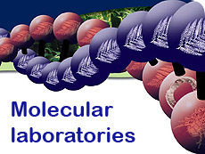 Molecular biology laboratories