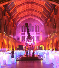 A magical evening reception in Hintze Hall