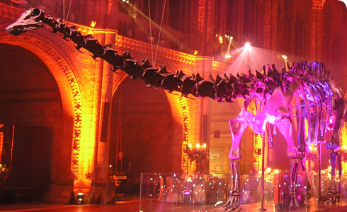 Dippy presides over an event in Hintze Hall