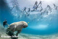 Look behind you, Mr dugong, from Wildlife Photographer of the Year