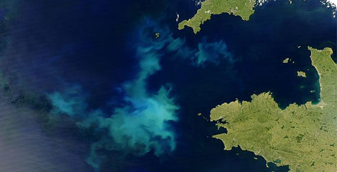 A satellite image of an algal bloom off the coast of Cornwall, Uk and Brittany, France