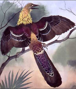 The artist Maurice Wilson's idea of a possible colour scheme for Archaeopteryx.