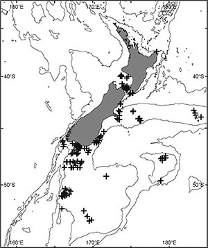Map showing distribution of Cinctipora elegans around New Zealand