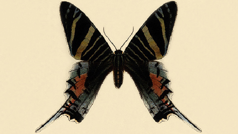 Illustration of Urania sloanus