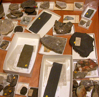 Drawer of conulariid fossils collections.
