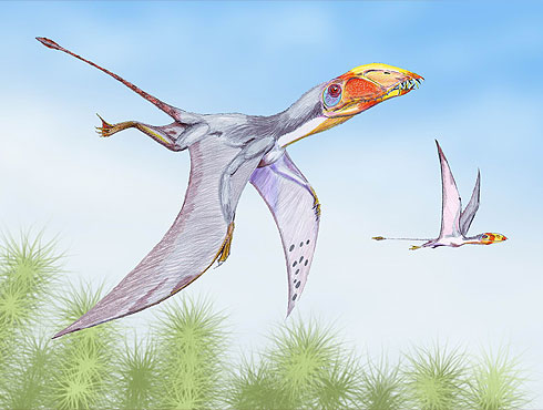 Artist's impression of Dimorphodon in flight