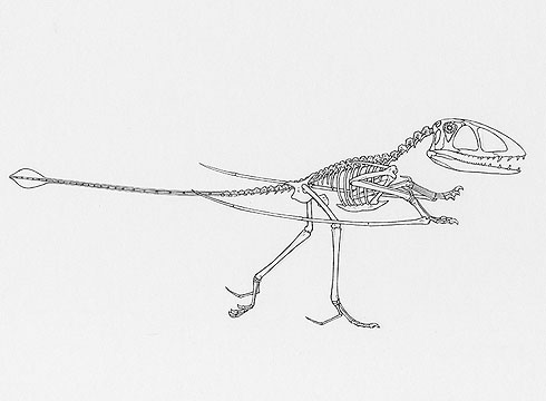Drawing of Dimorphodon macronyx walking