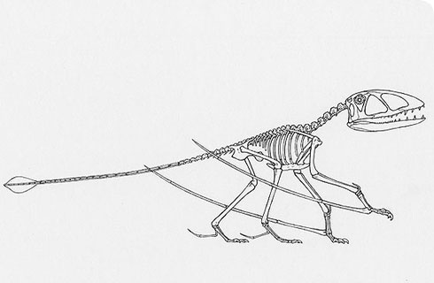 Skeleton of Dimorphodon walking on all fours.