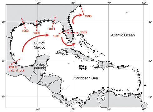 Distribution of Echinolittorina placida