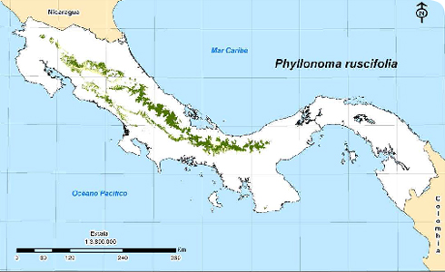 Distribution of Phyllonoma ruscifolia across Costa Rica and Panama