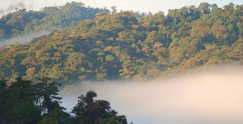 Cloudforest  in the western Andes, the Neptune beetle's habitat