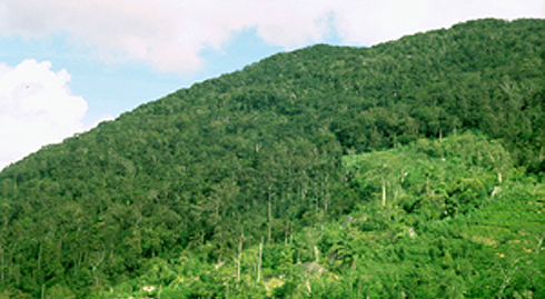 Rainforest and encroaching tea small holdings (paler green area in right foreground) in southwesten