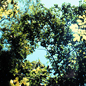 Lowland rainforest canopy