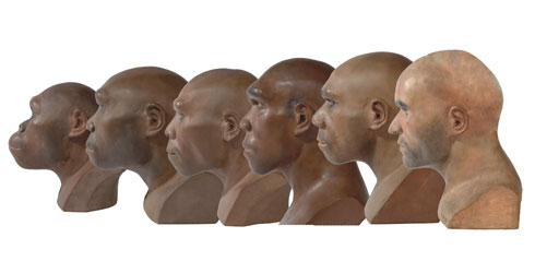 Hominid reconstructions in chronological order