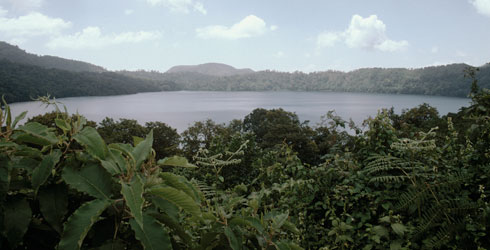 The lake bottom habitat of Isoetes biafrana in Lake Oku.