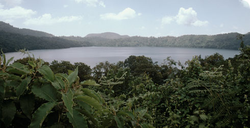 The lake bottom habitat of Isoetes biafrana in Lake Oku