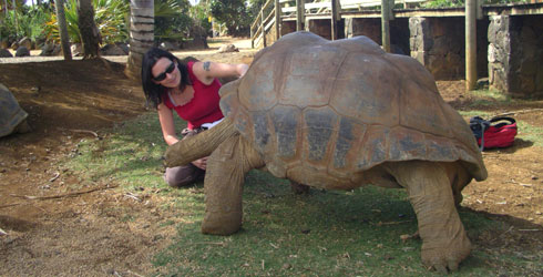 The author and a large Aldabra tortoise at La Vanille Reserve