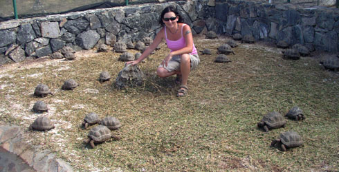 The author and lots of baby tortoises at the Francois Leguat Tortoises and Caves Reserve