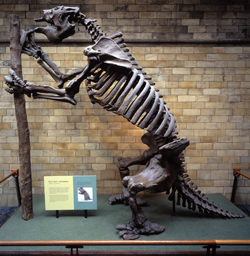 http://www.nhm.ac.uk/resources-rx/images/1049/megatherium-americanum-plaster-skeleton-55740-1.jpg