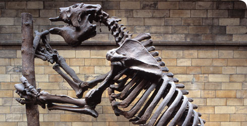 Plaster cast reconstruction of the skeleton of Megatherium americanum