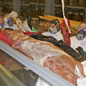 Moving the Museum's giant squid specimen into its tank in the Darwin Centre