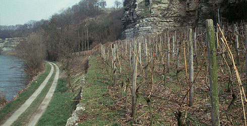 Vineyard in the Neckar valley, SW-Germany