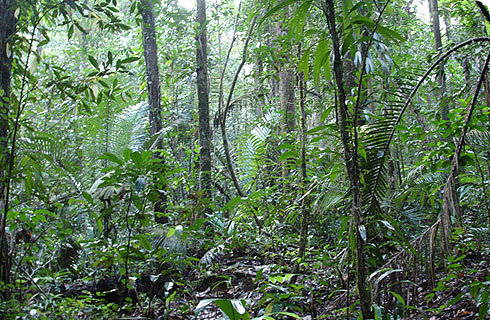 Rain forest in French Guiana