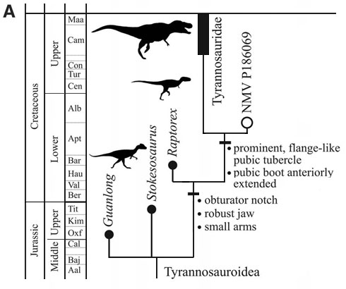 Timeline showing distribution of Late Jurassic and Early Cretaceous tyrannosauroids