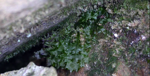 Newly developed sporophyte